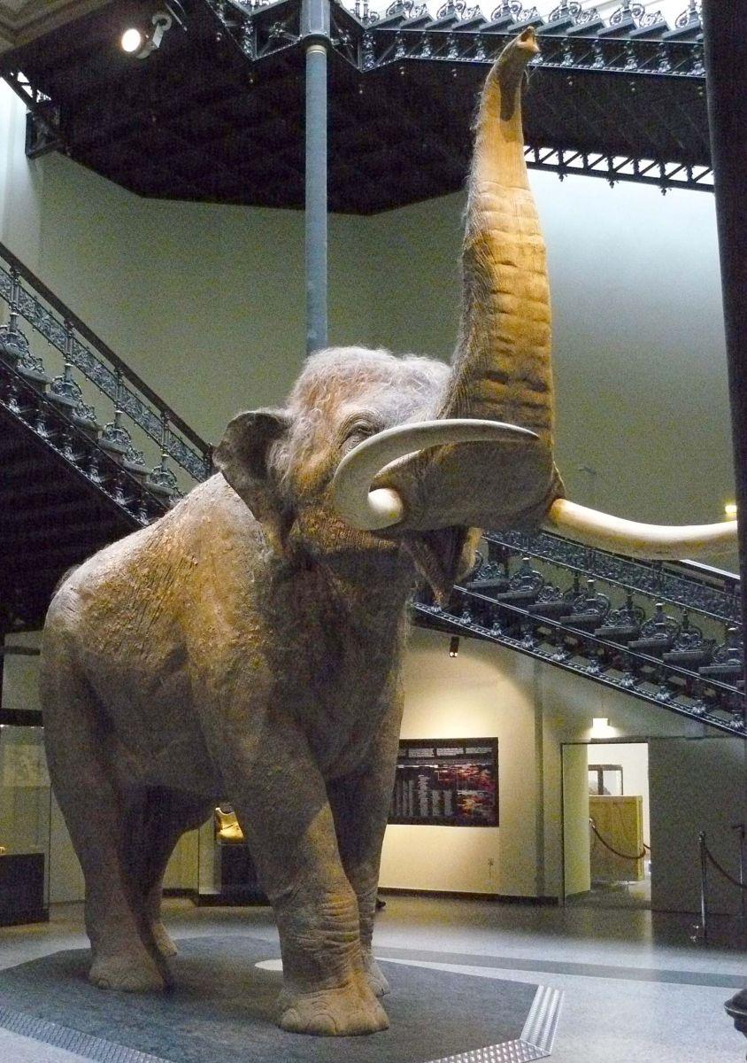 Eléphant antique
